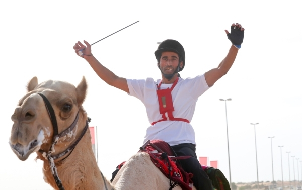 خالد النعيمي على ظهر (مكرم) محتفلاً بالفوز في ماراثون لهباب للهجن العربية الأصيلة أمس. (الرؤية)