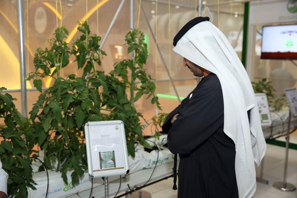 دعم مشاريع البيوت المتميزة في الزراعة. (صورة أرشيفية من معرض الابتكارات الزراعية في أبوظبي)