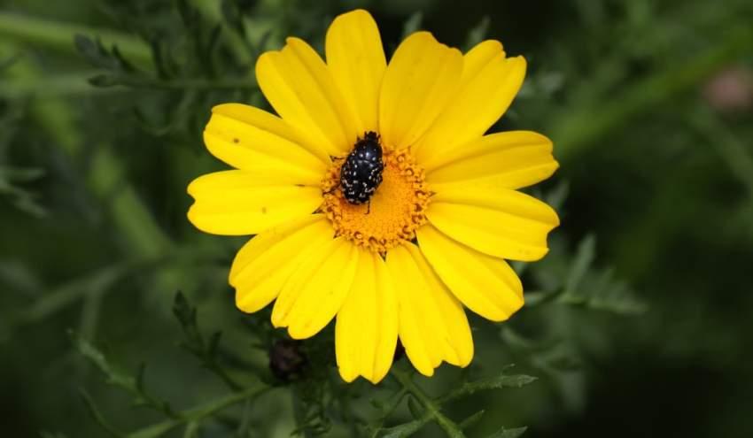 وهي تبشر بقدوم فصل الربيع في مدينة نابلس