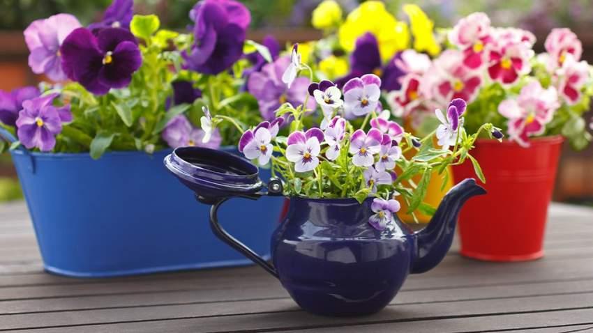 اختيار النباتات الخارجية مهم لإضفاء لمسة من الطبيعة على شرفتك