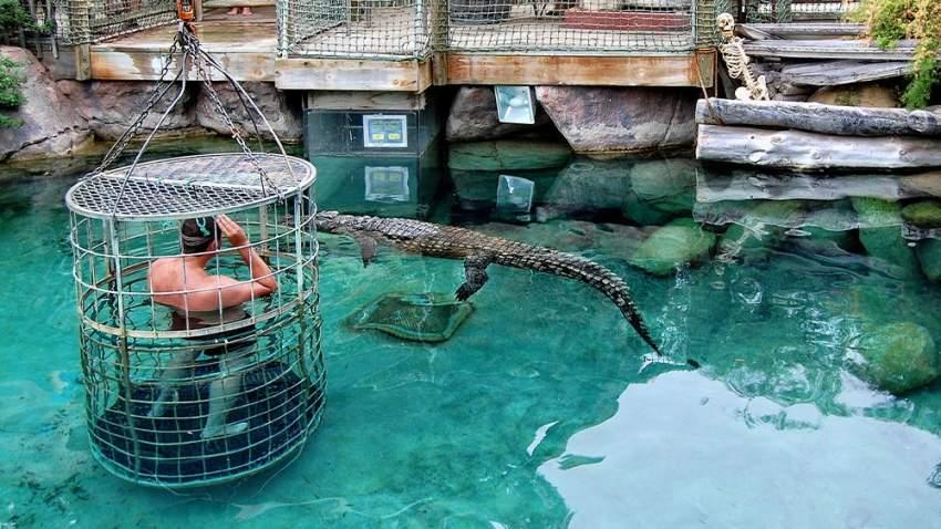 الغوص مع التماسيح