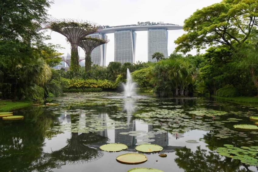 أزهار ليلي بوند تكثر في سنغافورة