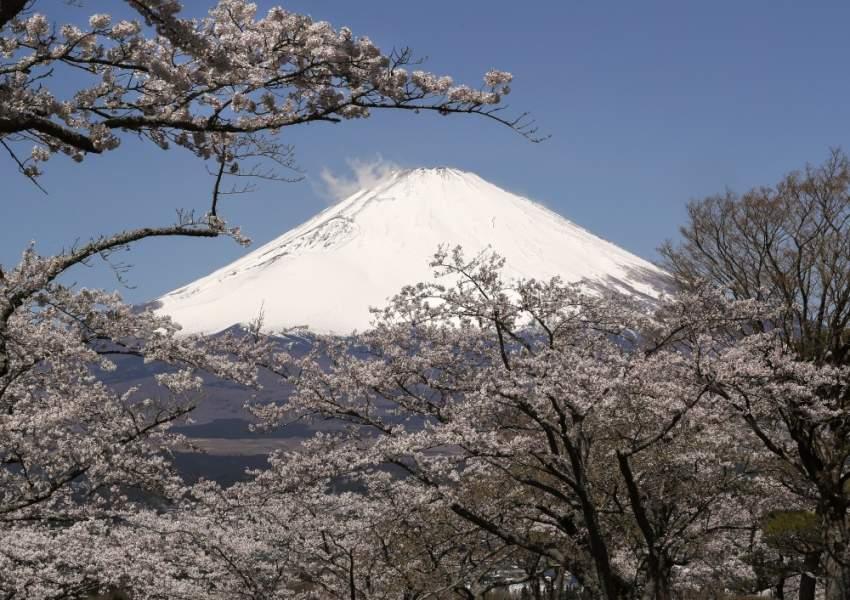 بدأت أزهار الكرز بالتفتح إيذانا بوصول فصل الربيع، حيث تشتهر اليابان كثيرا بهذا النوع من الأشجار