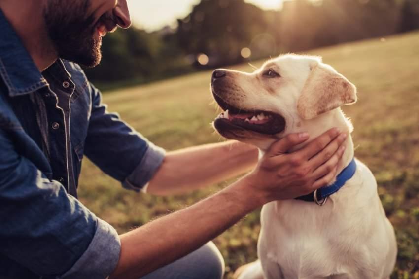 ما الرابط بين الكلاب وصحة الإنسان؟ علماء يجيبون