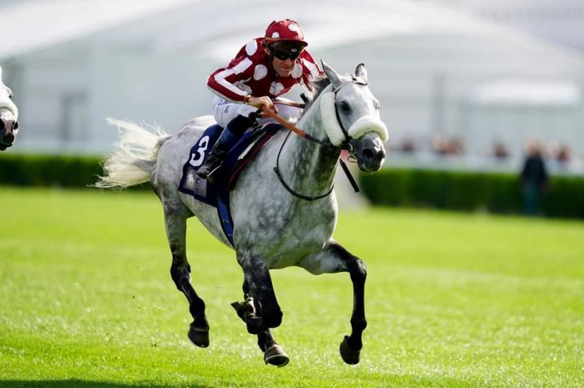 «طيف» في طريقه للظفر بكأس رئيس الدولة للخيول العربية الأصيلة في باريس. (الرؤية)