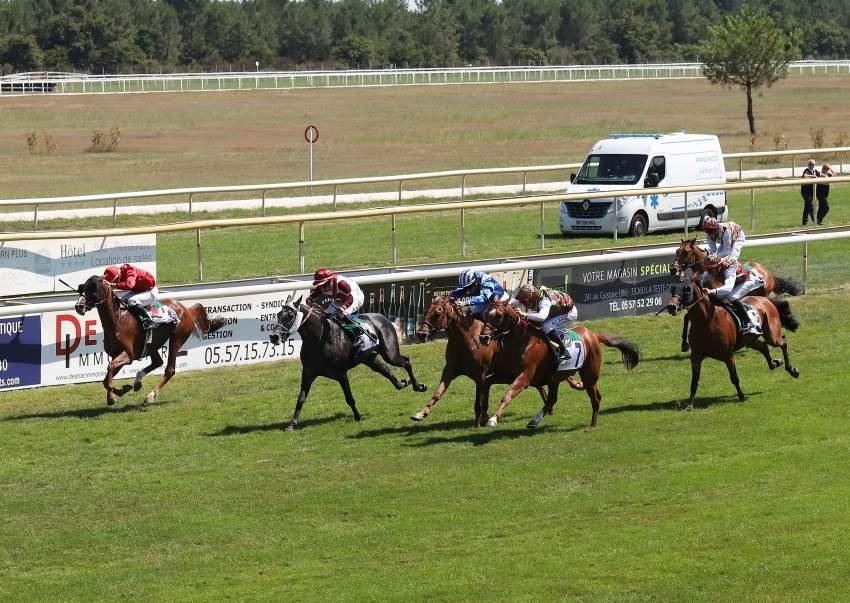 قمة التنافس في فرنسا للخيول العربية