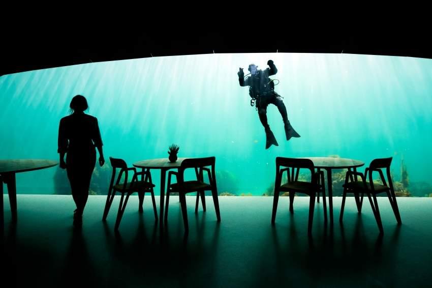 «أندر» .. طعام برفقة القرش تحت الماء