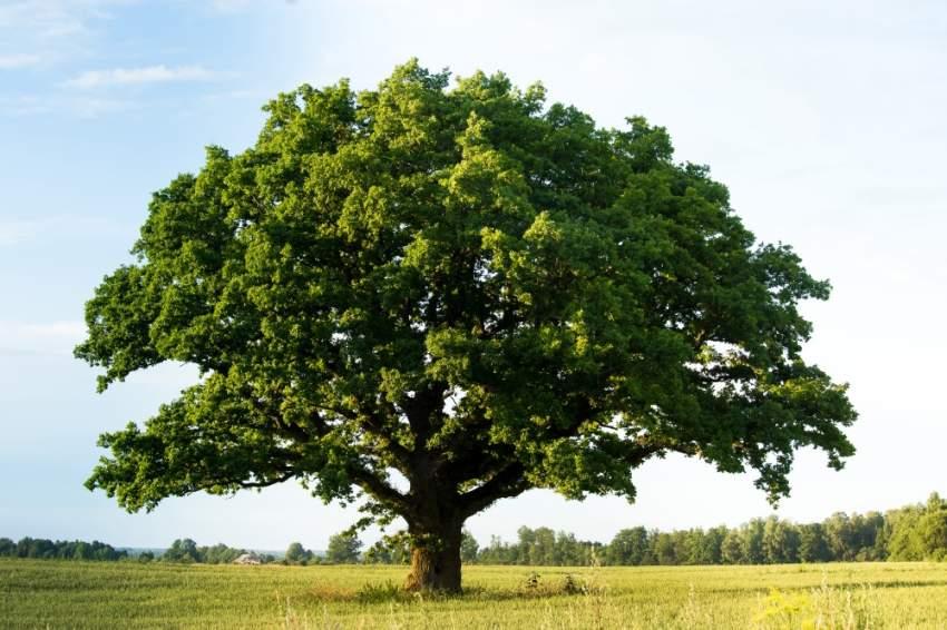 وفاة سائحة ألمانية في فرنسا.. والسبب شجرة