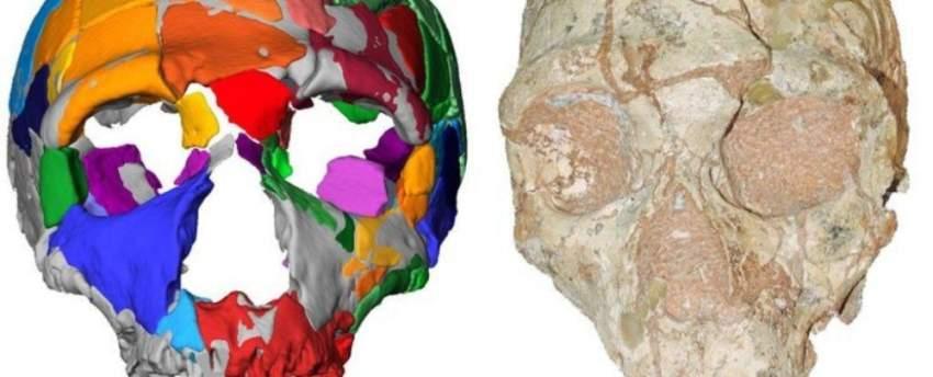 بقايا أقدم إنسان عاش خارج أفريقيا تعيد كتــــــــابة تاريخ أوروبا السحيق