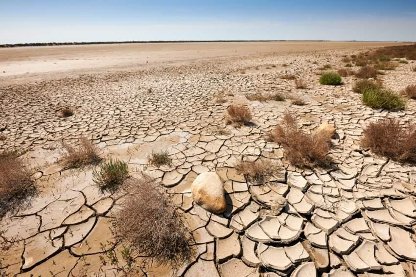 جين نباتي يقوّي الجذور ويواجه التغيُّر المناخي