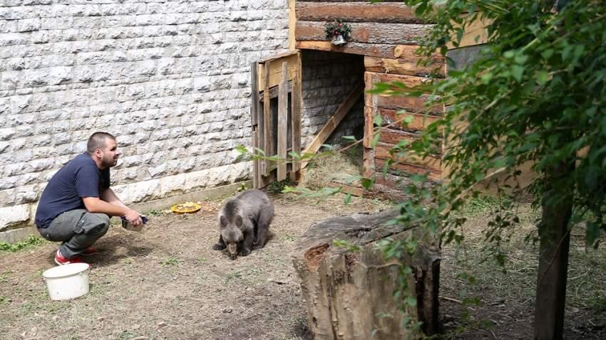 عايدة اكتسبت وزنا إضافياً بعد اهتمام حديقة الحيوانت في سراييفو بها