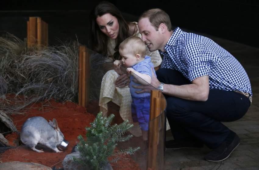 الأمير جورج يتفحص حيواناً خلال زيارة رسمية لأستراليا عام 2014 (Getty images)