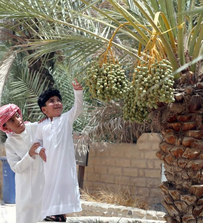 شجرة النخيل.. أسطورة الحكايات ورمز الكرم في الإمارات - أخبار صحيفة الرؤية