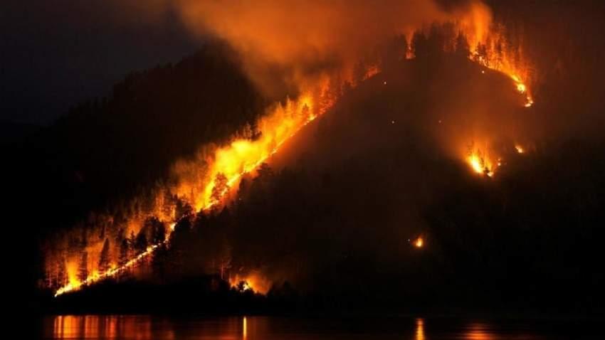دخان الحرائق في سيبيريا تسبب في نفوق 80 في المئة من فراخ الطيور الجارحة