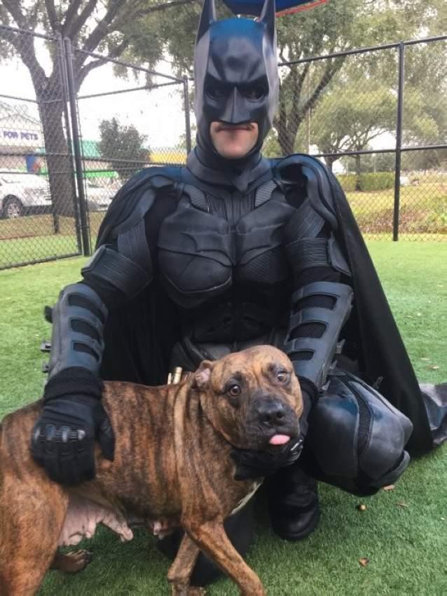 """""""باتمان"""" يُنقذ الحيوانات الضالة في فلوريدا"""