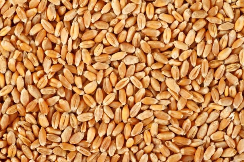 الإمارات والسعودية تدعمان شعب السودان بـ 540 ألف طن من القمح