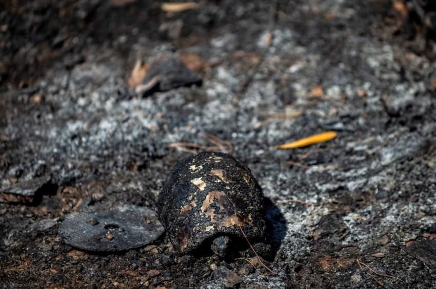 حرائق الغابات تجتاح اليونان وقبرص