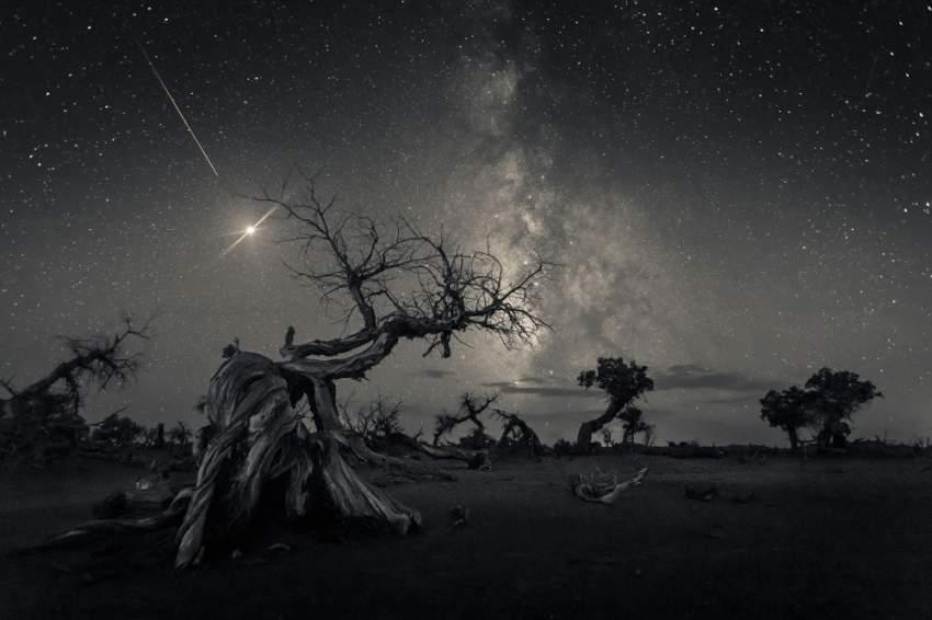 2. التقطت هذه الصورة شبه الخرافية لأشجار ذبلت في منطقة إجينا المنغولية. (وانغ زهينغ)