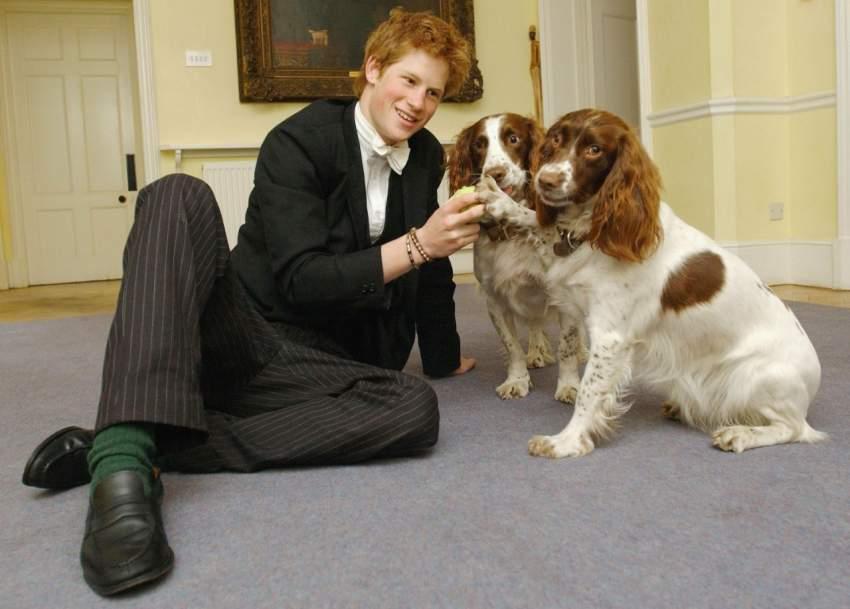 هو ثاني أطول شخص في العائلة الملكية البريطانية بعد شقيقه ويليام، ويبلغ طوله ما يقارب 187 سنتيمتراً.