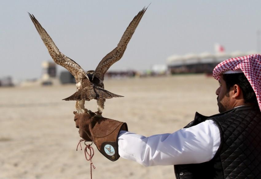 قطري يحمل طائر الحباري الأفريقي. (أرشيفية - رويترز)