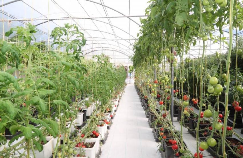 الزيودي يؤكد أهمية المبادرات الزراعية الوطنية لتعزيز التنوع الغذائي وضمان استدامته.