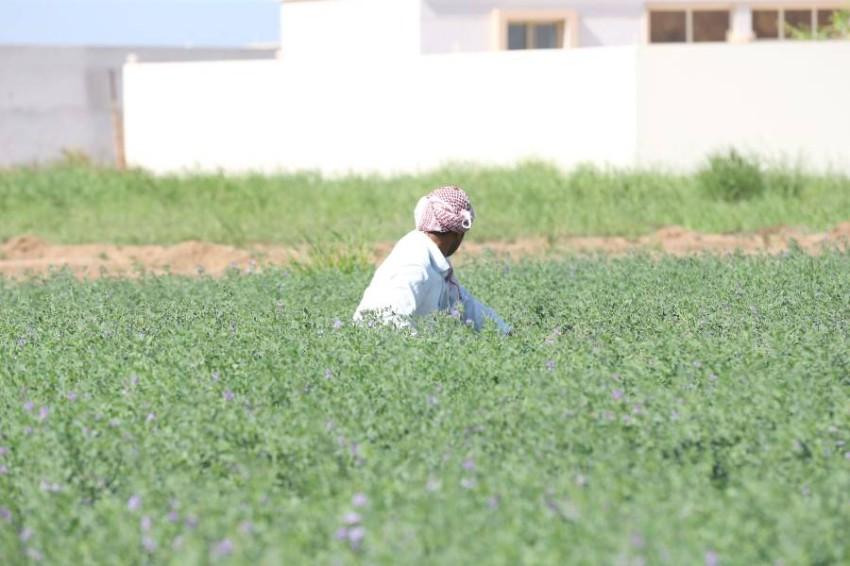 شراكة بين «الاستدامة العالمية» و«بيور هارفست» لتوفير 30 هكتارا من الأراضي الزراعية بأبوظبي