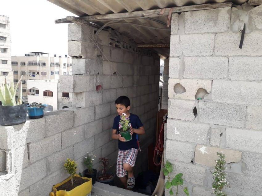الطفل محمد يقوم بنقل شتلات الورد إلى سطح المنزل. (الرؤية)