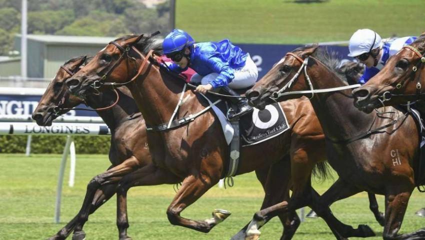 خيول جودلفين في أستراليا. (الرؤية)