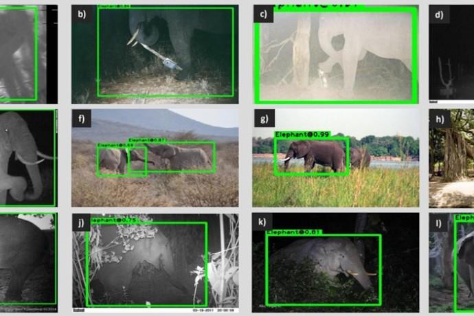 يمكن للذكاء الاصطناعي تحديد ما يراه على الفور من خلال الكاميرا، وذلك بفضل التدريب الذي حصل عليه من المطورين.
