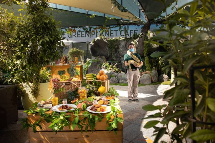 The Green Planet Picnic-9821