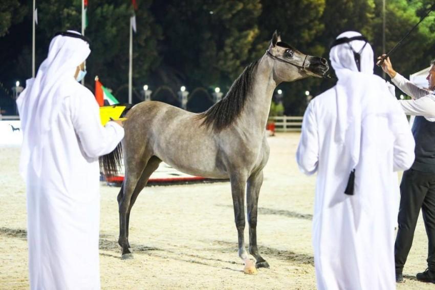 أحد الخيول أمام لجنة التحكيم. (الرؤية)