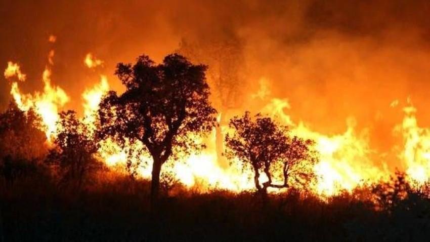 من حرائق غابات أغسطس في الجزائر. (أ ف ب)