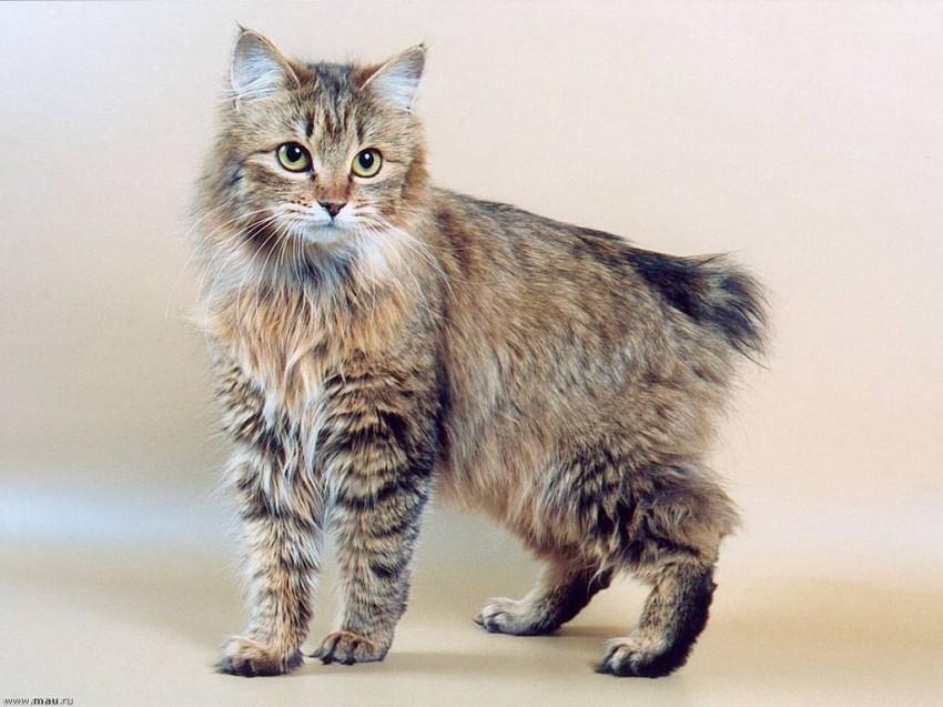دليلك الكامل أنواع القطط المنزلية والعناية المطلوبة أخبار صحيفة الرؤية