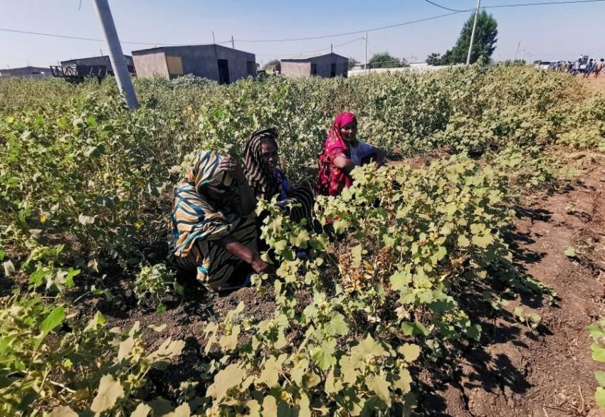 مزارع الفشقة على الحدود المشتركة للبلدين. (رويترز)