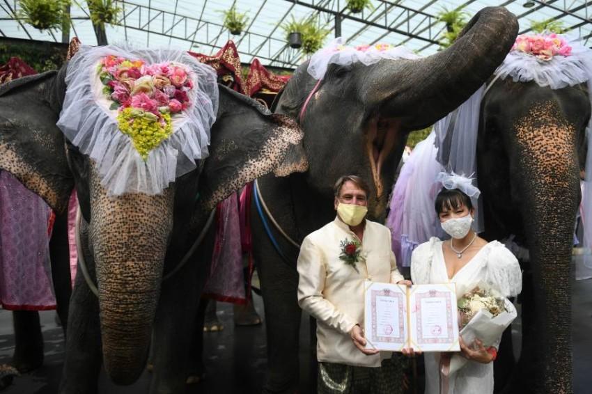 زفاف على ظهور الأفيال في تايلاند احتفاءً بـ«الفالنتين» - أخبار صحيفة الرؤية