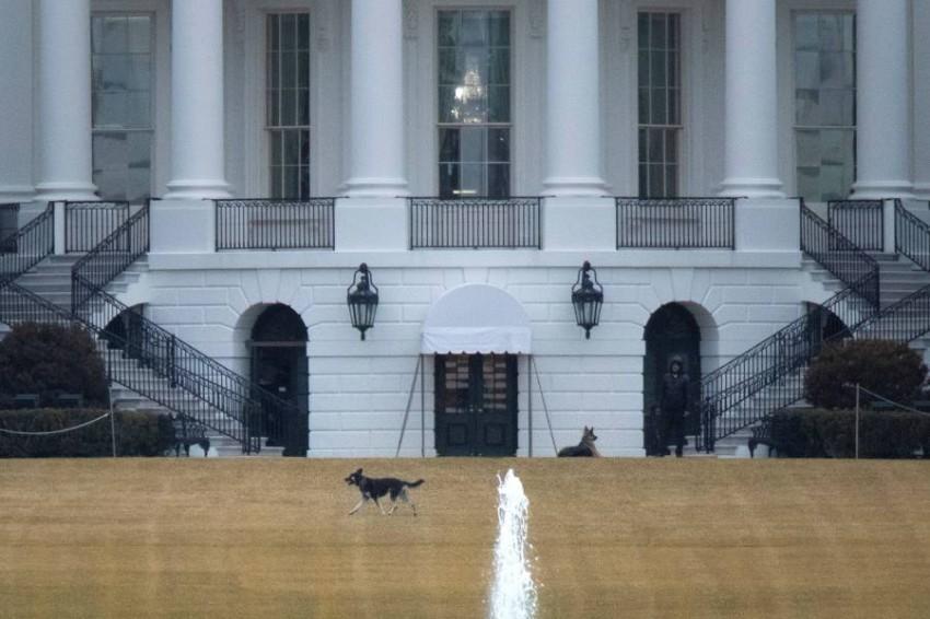 إعادة كلبَي بايدن إلى منزل العائلة - رويترز.