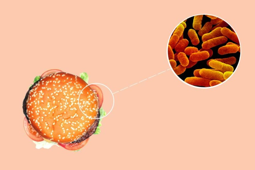 Food Bacteria.