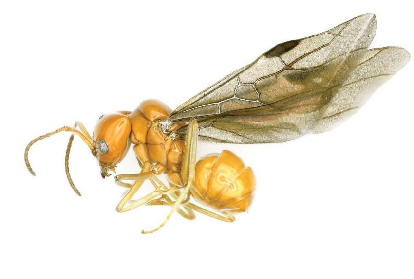 حشرات الأمازون