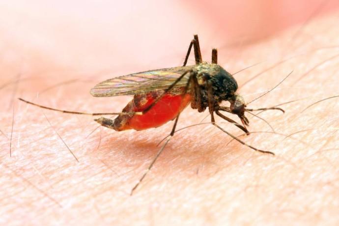 الصحة العالمية: هناك 39 دولة وإقليماً باتت خالية من الملاريا.