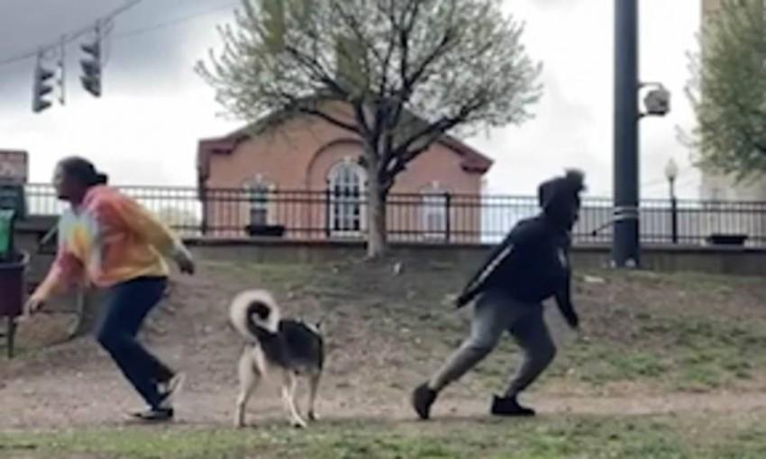 تحدي الركض في اتجاهين لاستبيان حب الكلب لأي طرف منهما