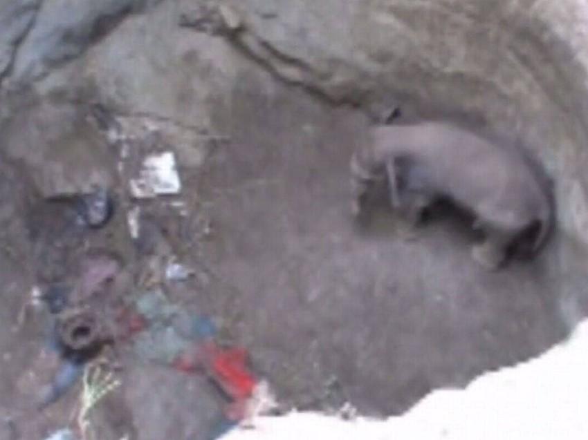 الفيل بعد سقوطه في البئر