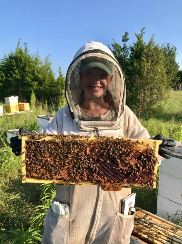 استعراض لقرص العسل