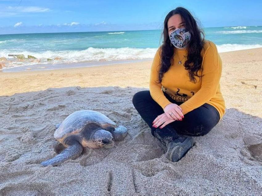 بعد علاج السلحفاة تُعيدها مي إلى البحر مرة أخرى