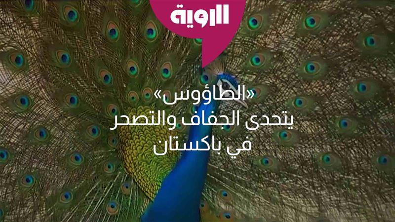 q7Jk8LaqDfdeRINckaEQ