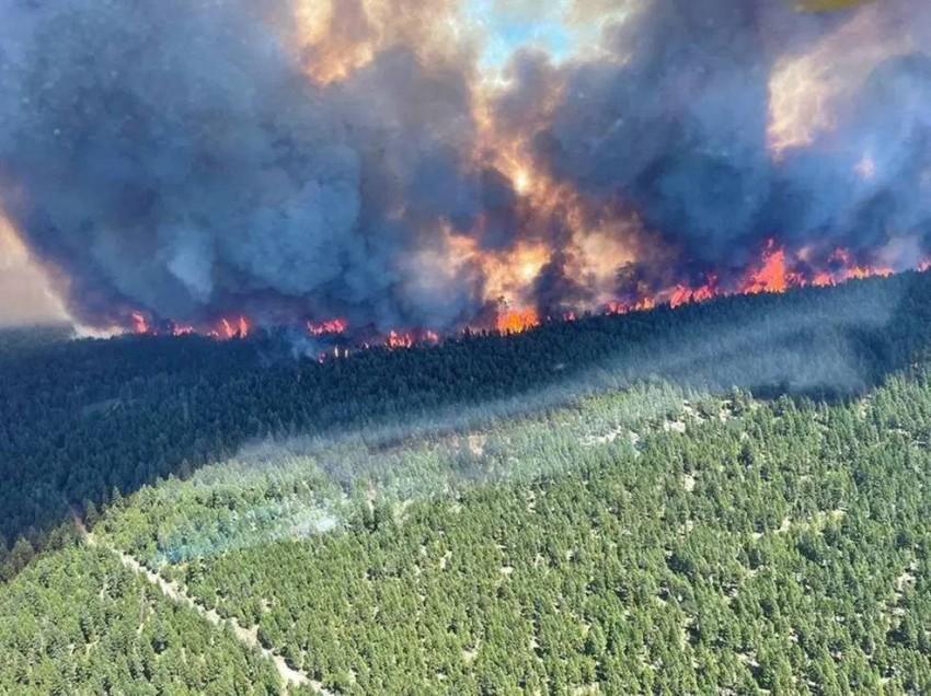 العديد من حرائق الغابات اشتعلت في مقاطعة بريتش كولومبيا بسبب موجة الحر. (أ ف ب)