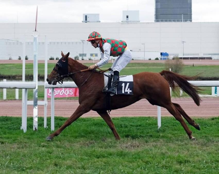 خيول ياس الناشئة تنافس بقوة في فرنسا. (الرؤية)